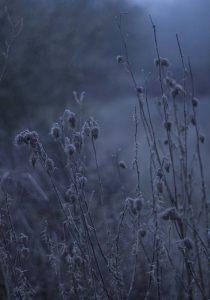 Disteln im Morgennebel