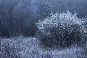 Dornbusch in der Morgendämmerung