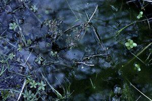 Seichte Wasserstelle mit Pflanzen