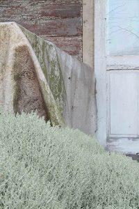 Eingewachsene Terrasse aus der Serie Scheue Laute