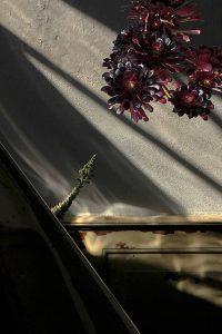 Konsole mit dunkelroten Pflanzen